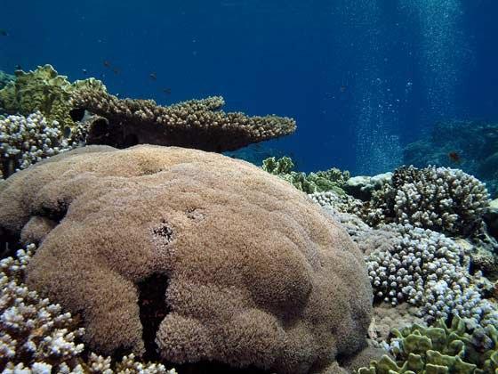 phoca_thumb_l_korallen-panorama-b-2