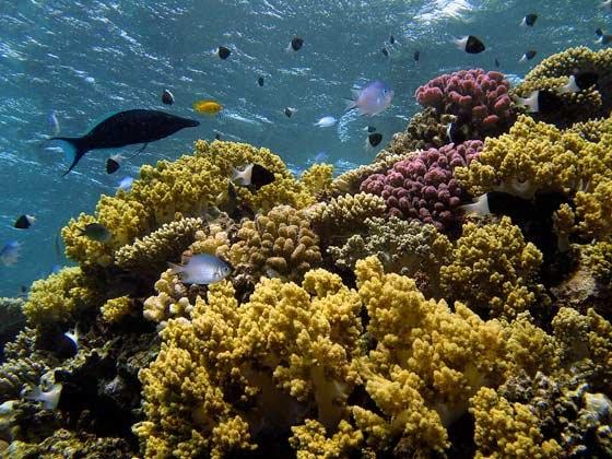 phoca_thumb_l_korallen-panorama-b-24
