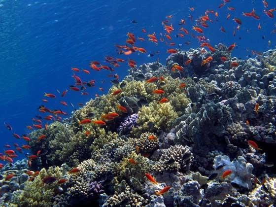phoca_thumb_l_korallen-panorama-b-9